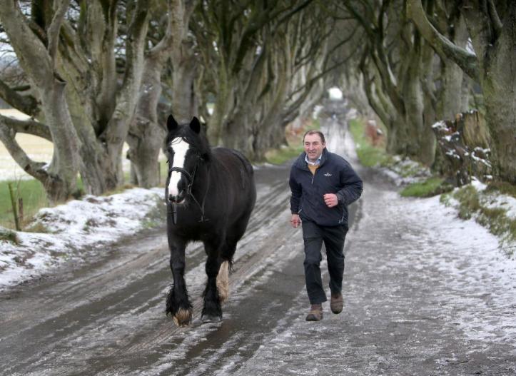 dark hedges horse 1